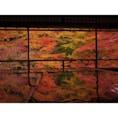 秋の京都:瑠璃光院