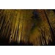 京都祭り:竹林 花灯籠