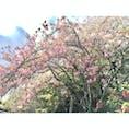 2018/4/8  龍安寺  龍安寺と言えば石庭ですが、皆さん載せるかなぁと思うのであえてその他を載せます   石庭ももちろん感動しましたが、自然が綺麗でした。広くて見応えがありました。