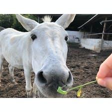#馬 #カドーレ #上の原牧場カドーレ #広島 #8月  エサやり体験ができて、食事やデザートもおいしい、のどかですてきな牧場🌱