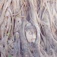 タイ アユタヤ ワット・マハタート 木の根で覆われた仏頭 1600年代中頃に胴体から地面に落ちた仏頭が、長い年月をかけて菩提樹の木に取り込まれたといわれています。