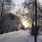 フィンランド、ロヴァニエミの街路