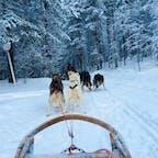 フィンランド、ロヴァニエミで犬ぞりに乗ってみる
