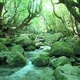 屋久島 白谷雲水峡 空気まで緑色。