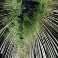 竹林の小径🎋  京都の嵐山駅から少し歩いた場所にある、 嵯峨野に広がる竹林です。 時期によって、夜はライトアップされるので より一層美しくなります✨