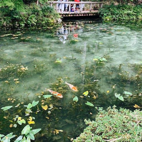 モネの池・根道神社