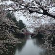 山形県、米沢、上杉神社のお堀の桜です。昨日4月15日で5分くらいでしようか。