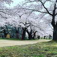 盛岡の桜の名所、盛岡城跡公園です🌸そろそろ散り始めそう🏯
