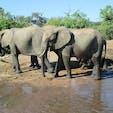 ボツワナ/チョベ ボートサファリで撮った象さん達。怖いほどの至近距離で感激しました。