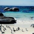南アフリカ共和国 野生のペンギンさんがたくさん生息しているボルダーズビーチ🏖 すぐ間近で見る姿が可愛い、ビーチの美しさとのコラボが素敵でした。