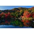 秋の早朝、天龍寺の借景庭園。