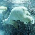 北海道 旭山動物園 私はこの動物園が大好きで何度行っても飽きることがありません^_^