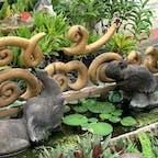 ワット マハーワンで水浴びする象さんを発見