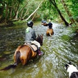 Mount-n-Ride Adventuresにて馬に乗りながら、川を歩けました♪ お迎えにきてくれますよ(^^) 初心者OK