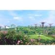 マリーナベイサンズのホテルの部屋から見た景色( ¨̮ )︎✿ ガーデンズ・バイ・ザ・ベイ❃
