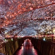 #目黒川 #目黒 #東京 2019年3月  お花見の名所はやっぱり凄い🌸🌸