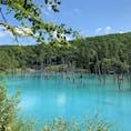 #青い池 #北海道