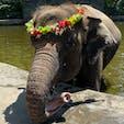 バリ島 エレファントサファリ パーク  ゾウさんを洗ったり、プールに一緒に浸かったり、乗ったりして楽しめました!