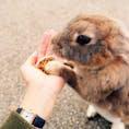 広島 大久野島 ウサギ島。休日だと昼から異常に混むので午前がオススメ。 ウサギかわいい。