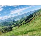 〈 アカロア 〉   iphoneのカメラでこの美しさ。  宝庫☺︎  #New Zealand