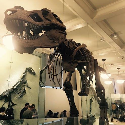 アメリカ自然史博物館