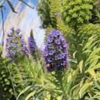 ニュージーランド ウェリントンから。  日本は秋ですが、南半球のニュージーランドは春。お花がきれいに咲いて、ミツバチが飛んでいます🐝