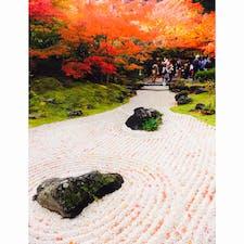 宮城県松島の円通院。白砂の庭園に落ちる赤い紅葉が可愛い!