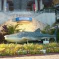 美ら海水族館🐟