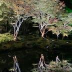 【 円通院 】宮城県 松島 紅葉のライトアップ 🍁