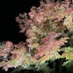 【円通院】宮城県 松島 色付き初めの紅葉