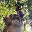 バリ島 モンキーフォレスト 森林浴しながら野生のお猿さんを見ることができます(^^)