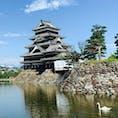 #長野県 松本城。朝の顔と白鳥