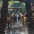 〰Tokushima🇯🇵〰 #祖谷の蔓橋