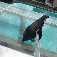 近かったペンギンさん