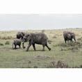 Masai Mara national reserve,Kenya🇰🇪 草食動物もしっかり見れました🐘🦒🦛🦌🐗