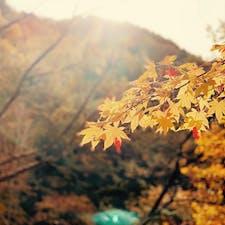せせらぎ街道の紅葉…綺麗だったなぁ✨