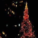 New York / Manhattan Washington Square Park ワシントンスクエアパーク近くの大きなクリスマスツリー♪