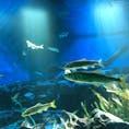 サンシャイン水族館 日本の清流
