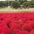 2016.10.23 🏕: 国営ひたち海浜公園(茨城/ひたちなか) 📷:***
