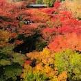 京都 東福寺。 目に入る全てが紅葉😳