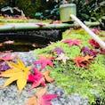 京都 大徳寺高桐院のおつくりばい