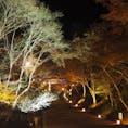 日吉大社  滋賀の日吉大社。 紅葉ライトアップ。 カップル多め。  #滋賀#日吉大社#紅葉#ライトアップ