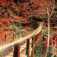 花貫渓谷/茨城 暗闇の中で煌々と光ってて幻想的でした🍁