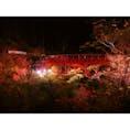 【静岡】   浜松市北区ある方広寺です 期間限定で三重塔や真っ赤な亀背橋がライトアップされます。 とても幻想的で心が浄化されますので この時期静岡に来た際はぜひ^_^