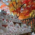 東京 世田谷区 豪徳寺 招き猫発祥の地と言われてる