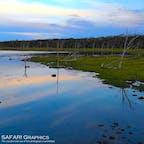 北海道野付半島で見られるミズナラが立ち枯れた様子を「ナラワラ」と言います。細いしなやかな木が枯れた様子はもの悲しいような不思議な光景を織りなしており、最果て感のある絶景を作り出しています。#北海道 #野付半島 #尾岱沼