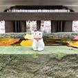 豪徳寺 招き猫 世田谷 東京