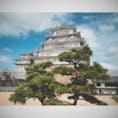 #兵庫県 姫路城にて。敷地が広い。