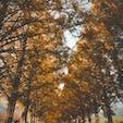#滋賀県 #メタセコイア並木