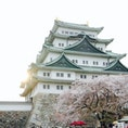 桜の季節の名古屋城